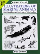 Illustrations of Marine Animals Book